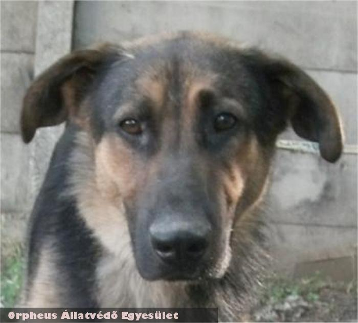 Pajkos kutyát egy kedves családnak adtuk örökbe! Támogassa a kutyamentést adója egy százalékával!