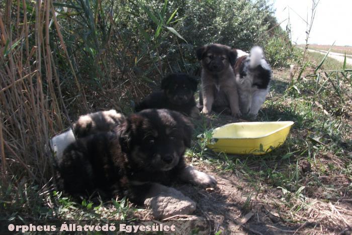 Nádasba dobált kutyakölykök mentése