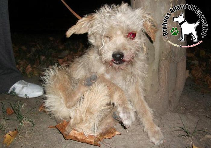 Szörnyû: az elütött kutyát - aki a csapódástól súlyos sérüléseket szenvedett - az utcán szedtük össze