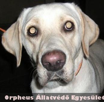 Labikát az Orpheus Állatmentõ szakembere az utcáról szedte össze, tette rendbe, és juttatta vissza eredeti gazdájához