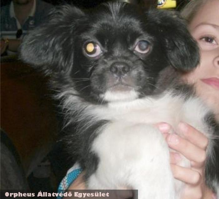 Geri kutya az utcáról az Orpheus Állatvédõ Egyesület révén menekült meg, és került szeretõ gazdihoz