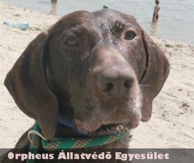 Sysit strandról mentette az Orpheus Állatmentõ Csapat, már szeretõ családnál van!