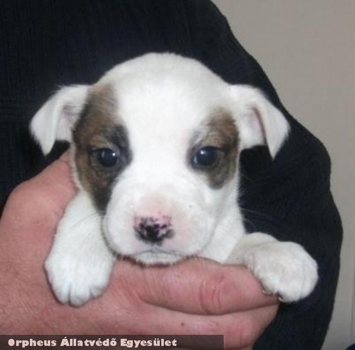Pihi kutyát utcára, dobozba tették ki, az Orpheus csapat felnevelte, szeretõ gazdihoz adta