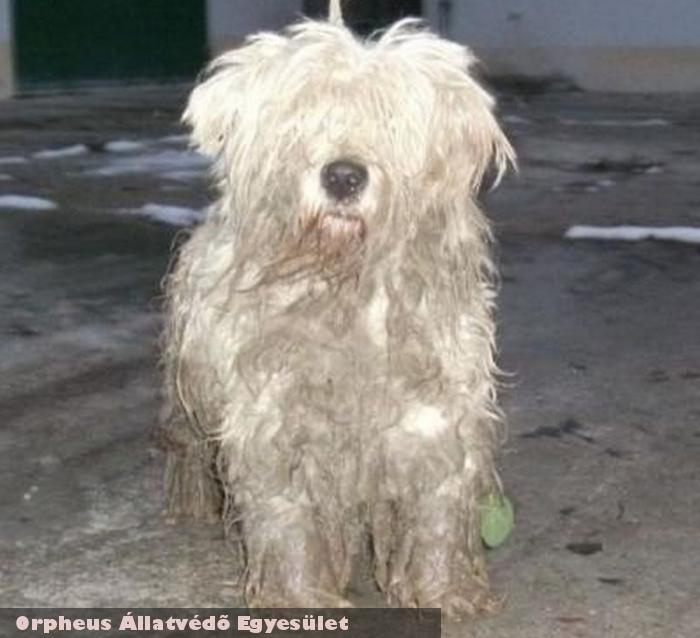 Mexi kutya visszakerült gazdájához - állatmentõ Orpheus Állatvédõ Egyesület