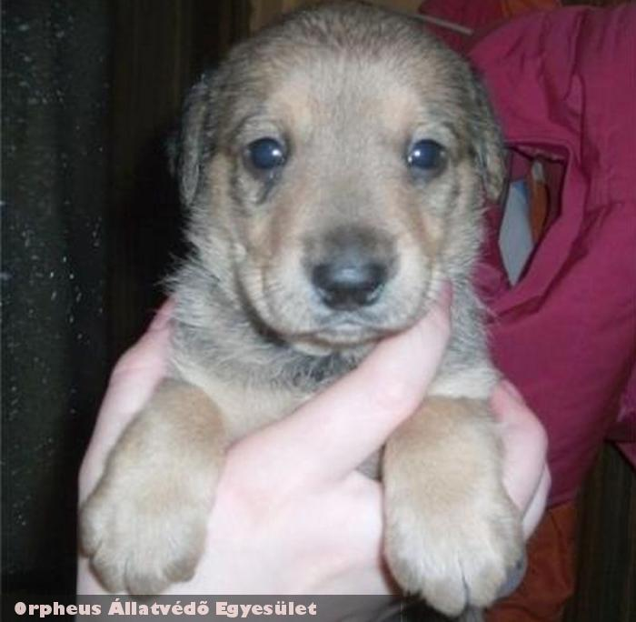 Bamba kutya az Orpheus Állatvédõ Egyesület révén menekült meg, és került szeretõ gazdihoz