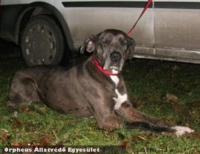 Luna kutya az Orpheus Állatvédõ Egyesület révén került szeretõ gazdihoz