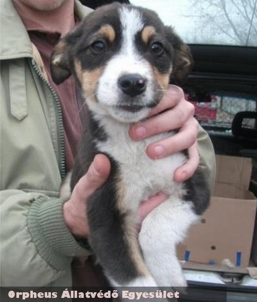 Pacó - kutyamentés: adó egy százalék felajánlással nagyban segíti a bajban lévõ állatok megmentését