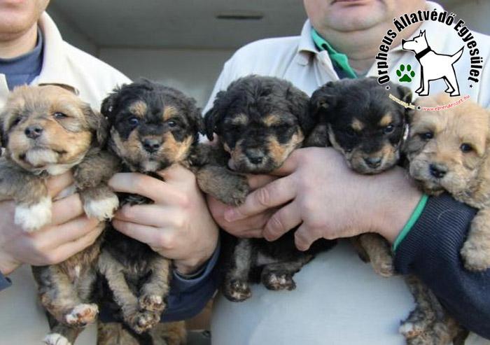 Öt kiskutya és az anyjuk került utcára - az Orpheus Állatvédõ Egyesület megmentette õket!