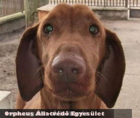 Rexer kutya élete az Orpheus Állatvédõ révén menekült meg :)