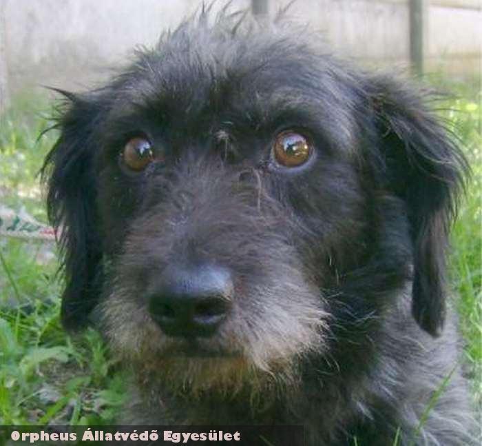 Lõrinc kutyát az adó 1 százalék felajánlások révén sikerült gazdihoz adni