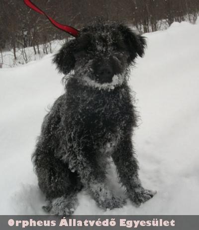 Norm kutyát a fagytól mentettük meg!
