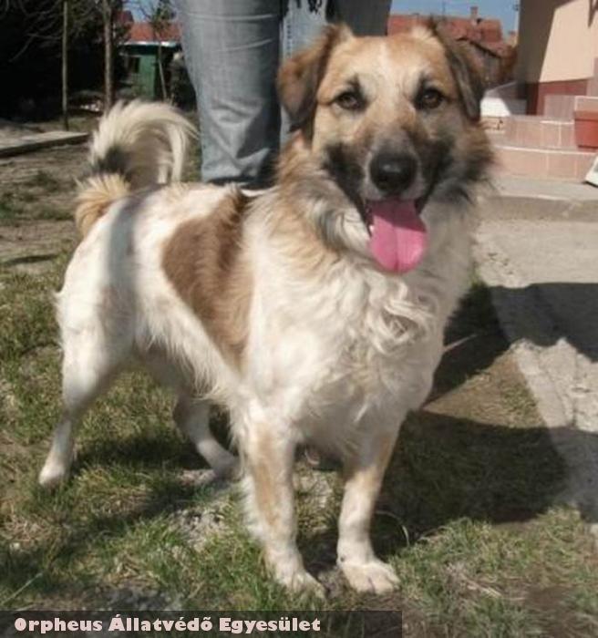 A lakosság támogatása nélkül nem sikerült volna Folti kutyust megmenteni