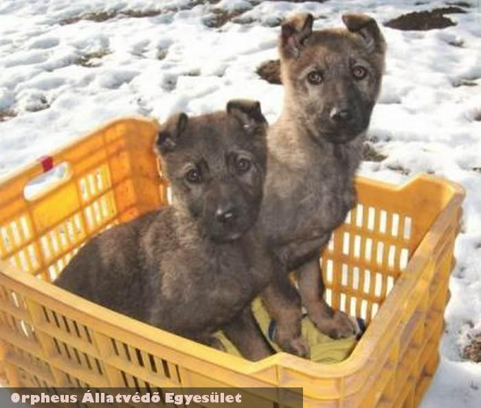 Szini és Szoni kutyák megmenekültek - adó 1% támogatása révén még több kutya és cica tud megmenekülni, köszönjük!