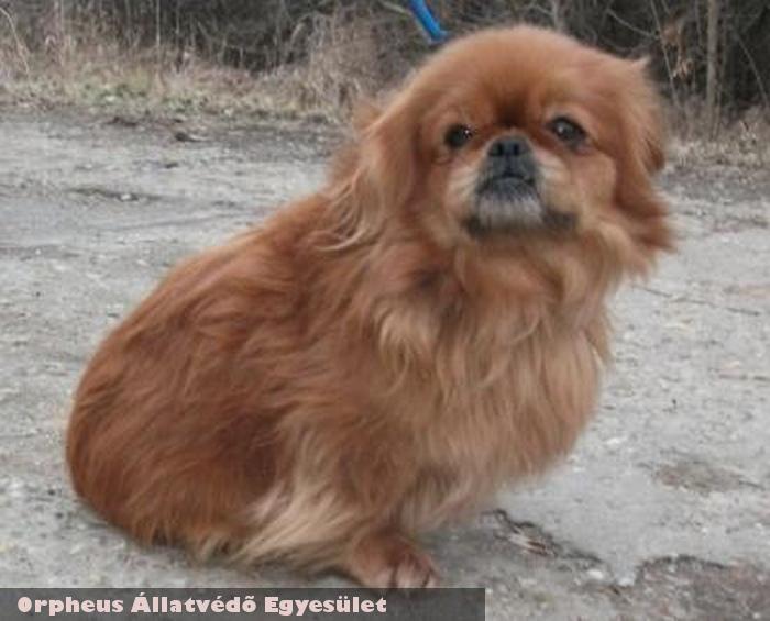 Manó kutya az adóegyszázalék támogatás révén gyógyult meg és került szeretõ gazdihoz!