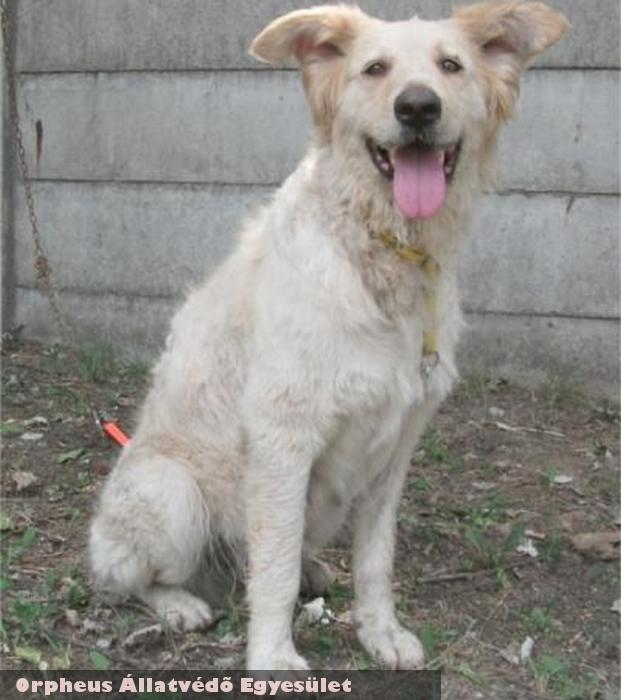 Méry kutya gazdihoz került - köszönjük Orpheus Állatvédõ Egyesület!