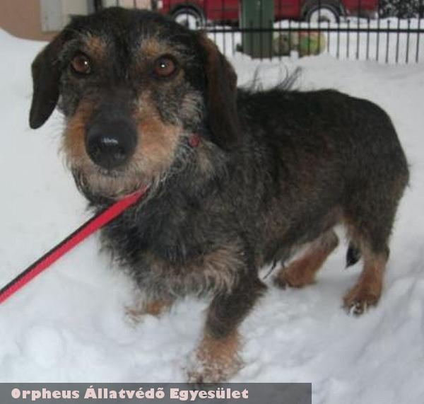 Miso kutyát az Orpheus Állatvédõ Egyesület állatmentõ csapata mentette meg