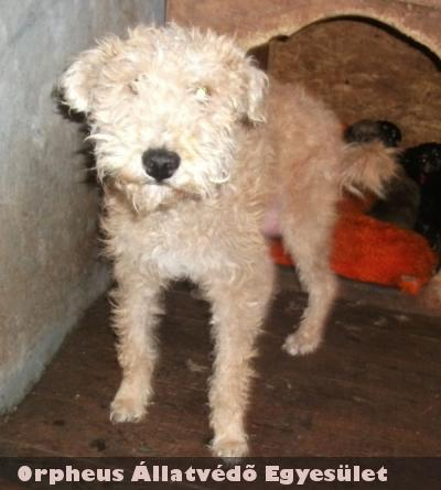 Émi kutyát a lakosság támogatása révén sikerült az Orpheus Állatvédõ Egyesületnek megmentenie