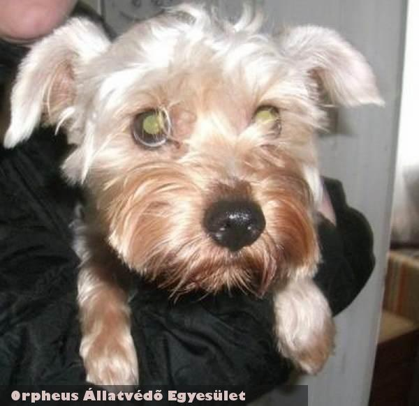 Pamacs kutyát a lakossági támogatás révén sikerült megmenteni