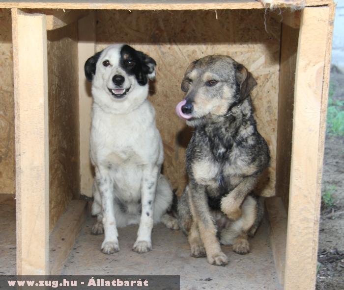 Megmentett Állatok - Támogassa az Állatok megmentését!