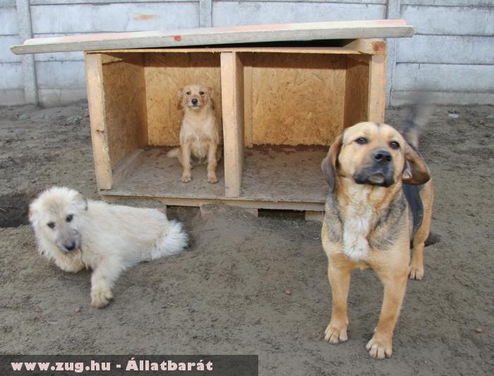 Kutya Csapat - Orpheus védencek