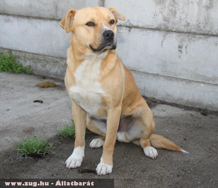 Bogyó kutyus az Orpheus Állatvédõ Egyesület által került megmentésre