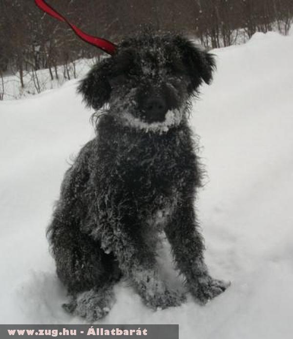 Norm kutyus az Orpheus Állatvédõ Egyesület védence gazdához került!