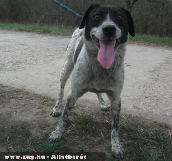 Folti kutya egy elhagyatott tanyáról, hanyag tartás végett került mentésre, új reményt kapott...