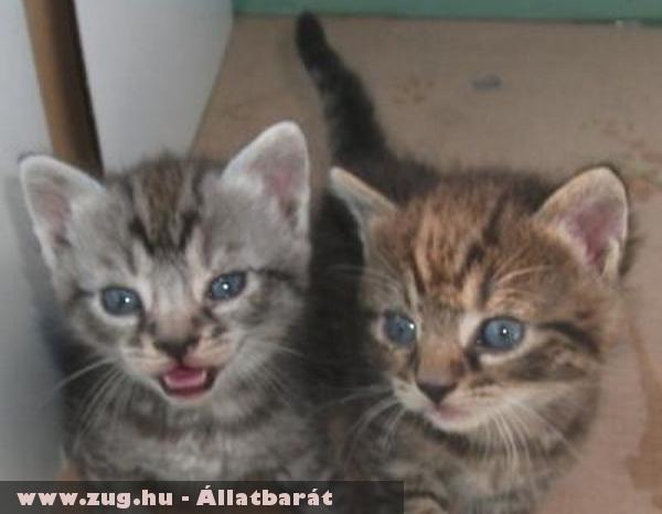 Cicamentés: Csurmi és Csirmi cicák gazdinál