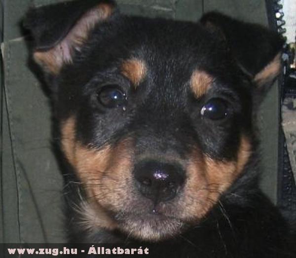 Futka kutyus az Orpheus Állatvédõ Egyesület állatmentõ munkája révén került új gazdihoz!