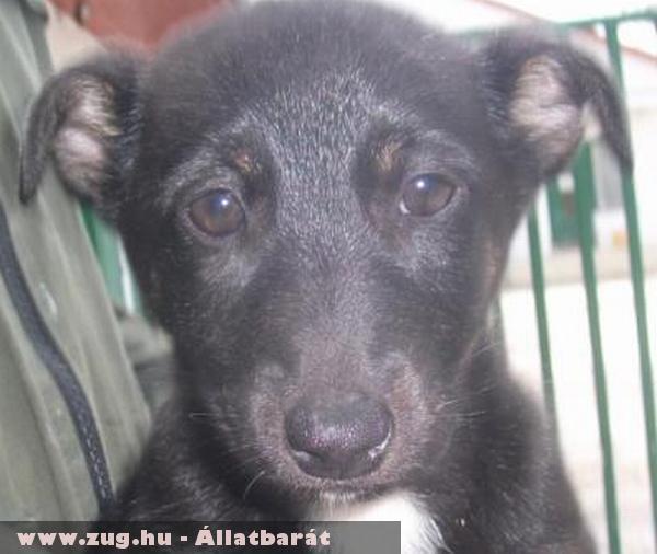 Anci kutya az Orpheus Állatvédõ Egyesület állatmentõ munkája révén került új gazdihoz!