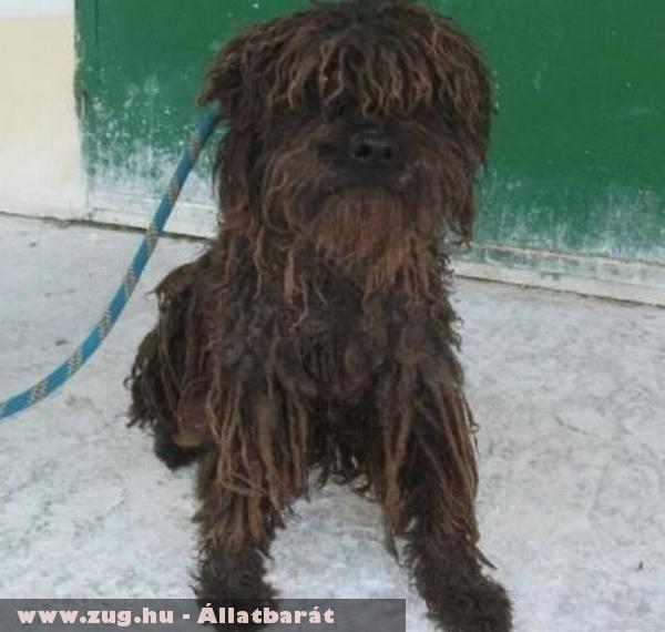 Sumi a puli kutyus az Orpheus Állatvédõ Egyesület állatmentõ munkája révén került új gazdihoz!
