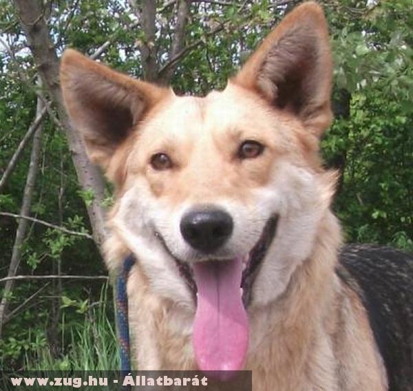Pötyi a németjuhász kutyus az Orpheus Állatvédõ Egyesület állatmentõ munkája révén került új gazdihoz!