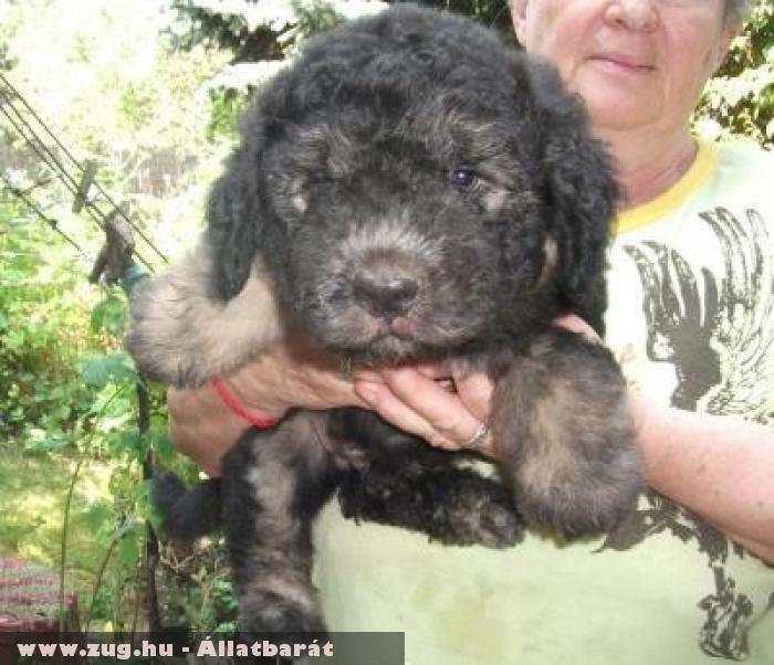 Taba kutya gazdinál - az Orpheus Állatvédõ Egyesület révén menekült meg