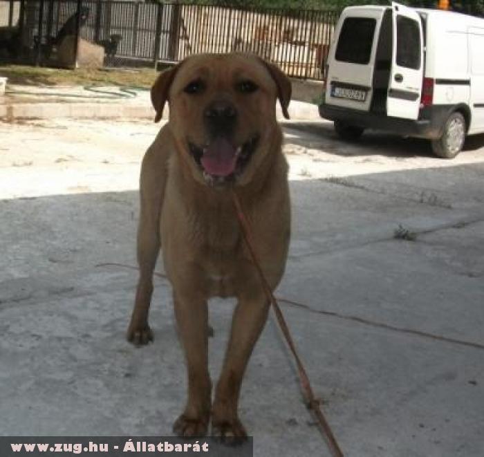 Oroszlán kutya az Orpheus Állatvédõ Egyesület révén menekült meg
