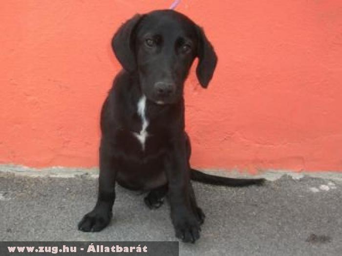 Labi a kis - kölyök kutya az Orpheus Állatvédõ Egyesület révén menekült meg