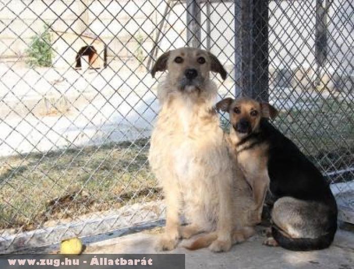 Erzsi és Teri kutyák jó helyre kerültek!