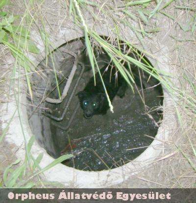 Li egy csatornába esett, ahonnan az Orpheus munkatársai mentették ki, majd kerestek neki új gazdit!