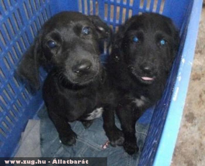 Trombi kutya és estvére az Orpheus Állatvédõ Egyesület révén menekült meg