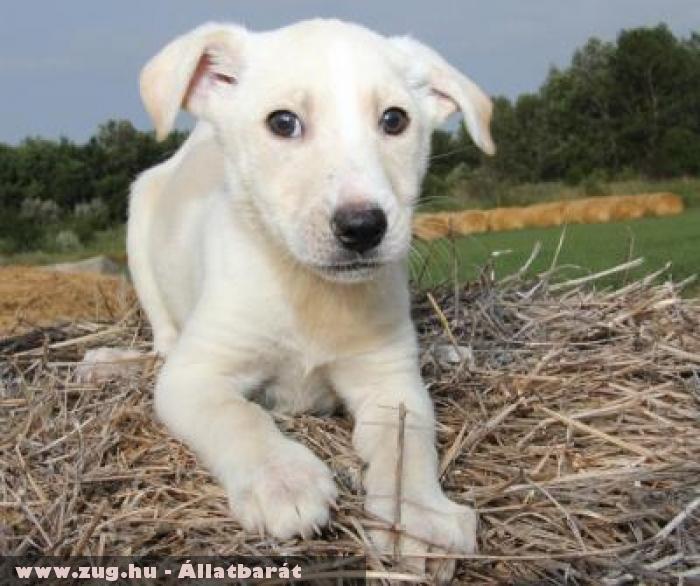 Cini kutyus az Orpheus Állatvédõ Egyesület révén menekült meg