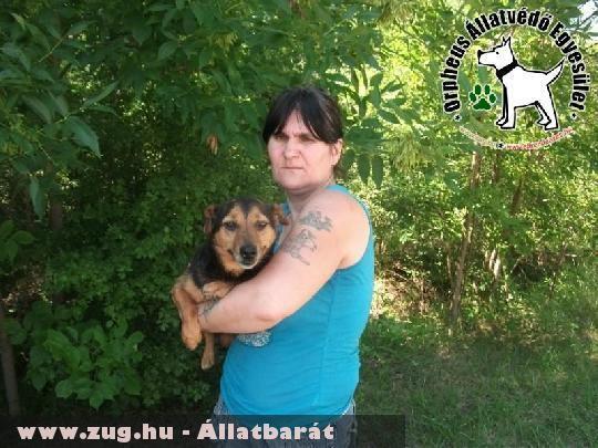 Pocok kutyust az állatvédõk az adó 1% támogatás révén juttatták szeretõ gazdihoz
