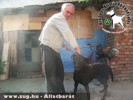 Kacat az Szja 1% felajánlások révén szeretõ gazdira talált