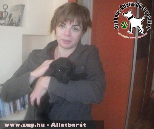 Pannika állatbarátok Szja 1% felajánlásának köszönhetõen került szeretõ helyre