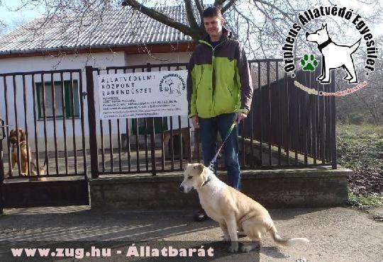 Adó egy százalék támogatásával Zebra szeretõ gazdára lelt