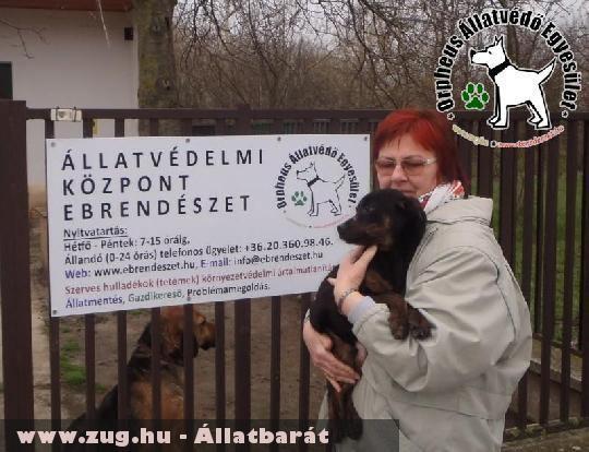 Nádas az állatbarátok adó egy százalékának felajánlása révén menekült meg