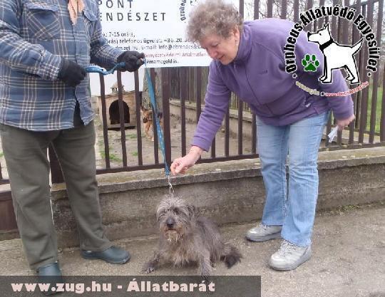 Hiéna az állatbarátok adó egy százalékának felajánlása révén menekült meg és került szeretõ gazdihoz