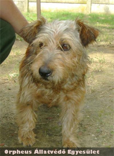 Béci: A kutyus egy magánházba került, jó helyre, ahol szeretik!