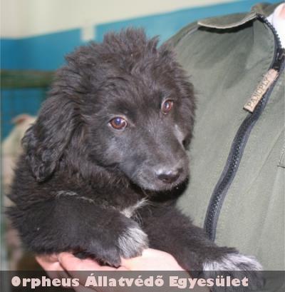 Egy tanya mellé kidobtak egy anya kutyust feltehetõen kölkeivel, nem törõdve további sorsukkal. Az Orpheus fogadta be õket!