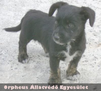 A kis Fürge új gazdára talált az Orpheus Állatvédõ Egyesület telepén
