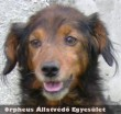 Állatvédõk Adó 1%-a mentette meg Jampec életét