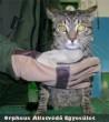 Baba: A megfigyelési idõ letelte után, a teljesen egészséges cicust gazdája haza vitte